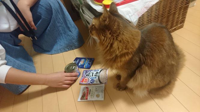缶詰を選ぶ猫、チー