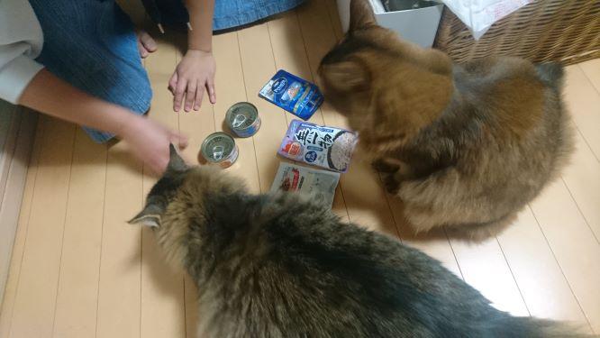 餌に集まる猫、トト
