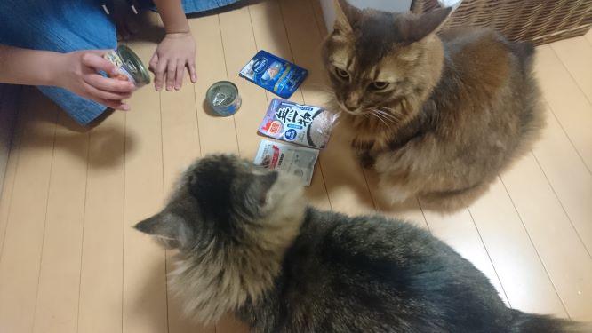 餌を選ぶ二匹の猫