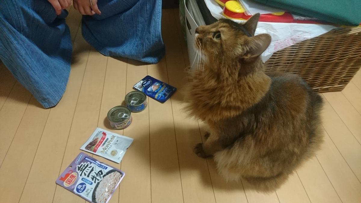 食べたい食材を選ぶ猫、チー