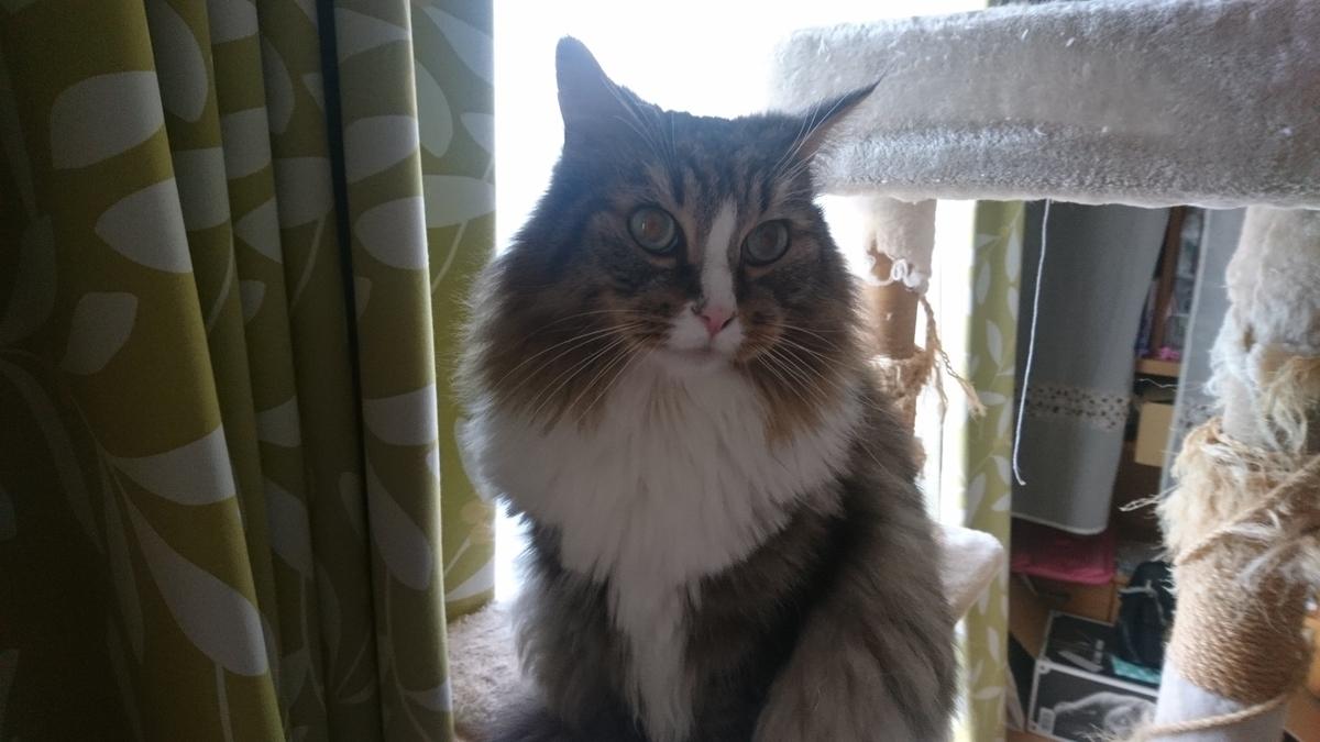 やっと起きてきた朝寝坊の猫、トト
