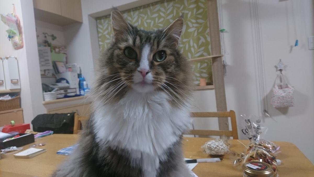 仕事行かないでと説得する猫、トト