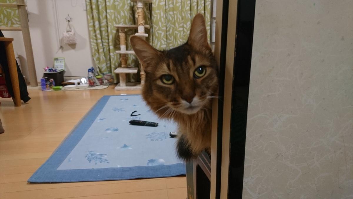家政婦は見たを再現する猫、チー