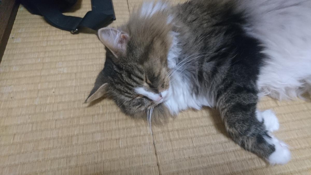 和室に猫が落ちていました、トトです