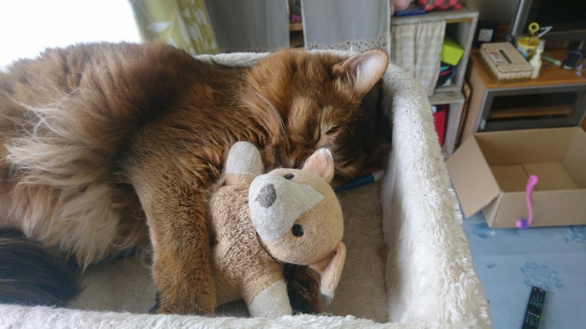 大好きなぬいぐるみを抱っこして寝る猫、チー