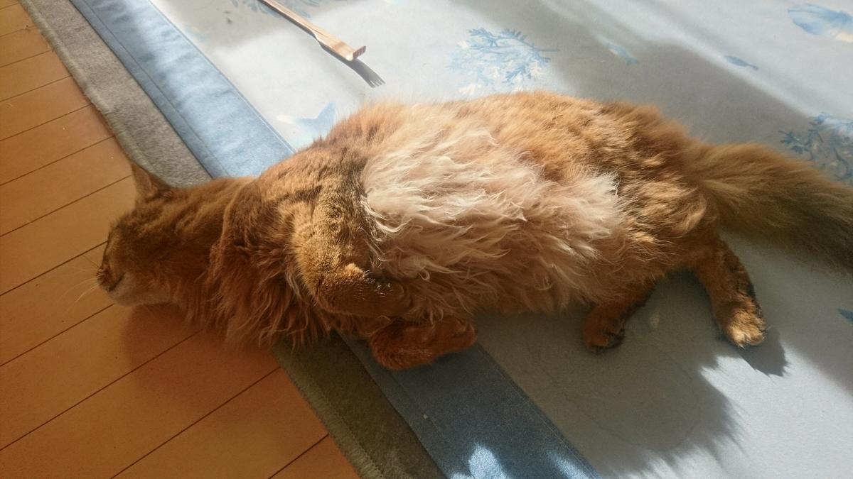 ちゅーるが欲しくて暴れる猫、チー