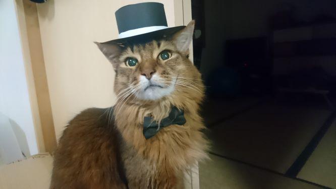 成人式のチー、蝶ネクタイとシルクハットをかぶる猫