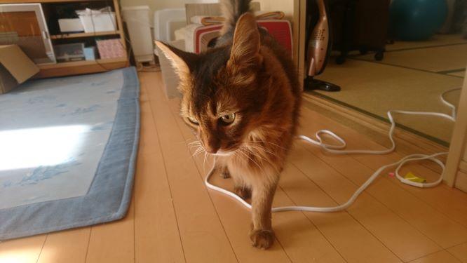 頭突きをする猫、チー