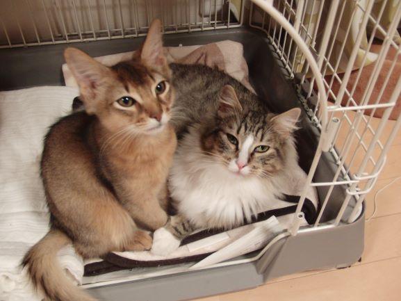 トトとチーの子猫時代