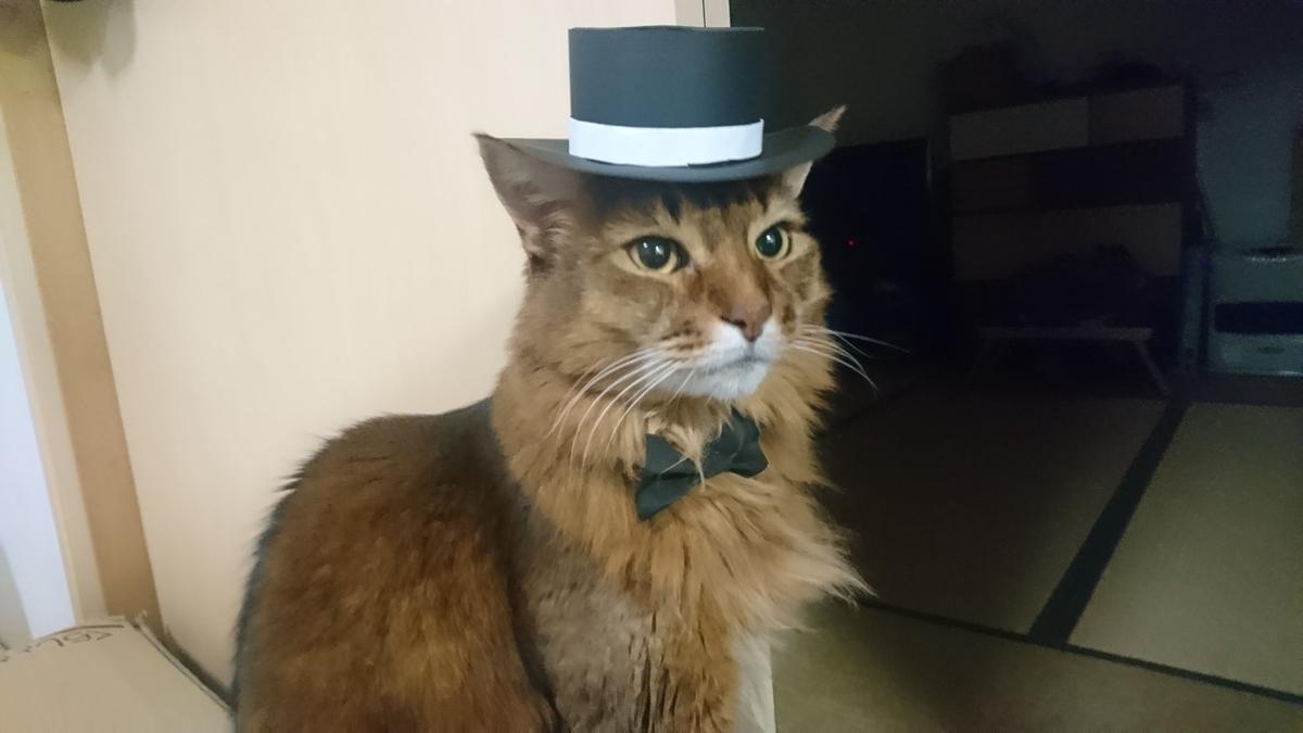 シルクハットをかぶった猫、チー