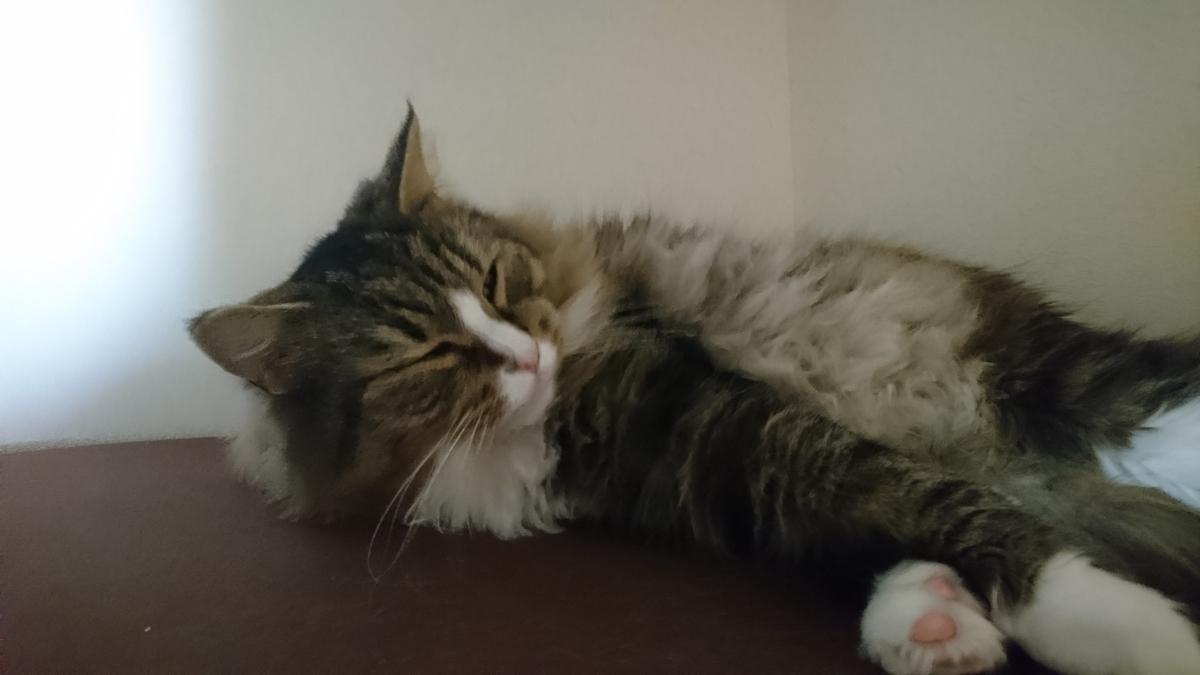 寒い一日を過ごした猫、トト