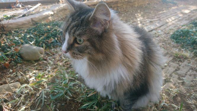 お庭を散歩する猫、トト