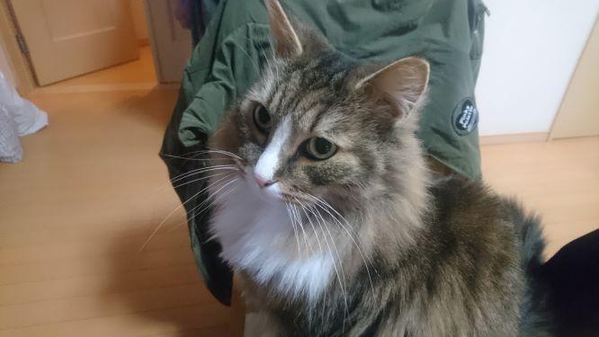 決め顔の猫、トト