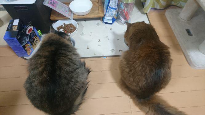 食欲旺盛な猫、トトとチー