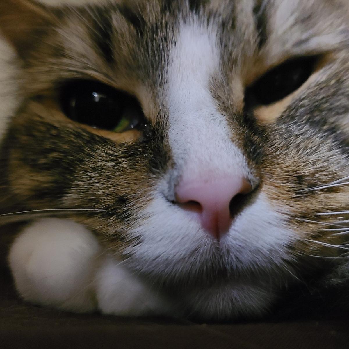 10時過ぎに起きてきた猫、トト