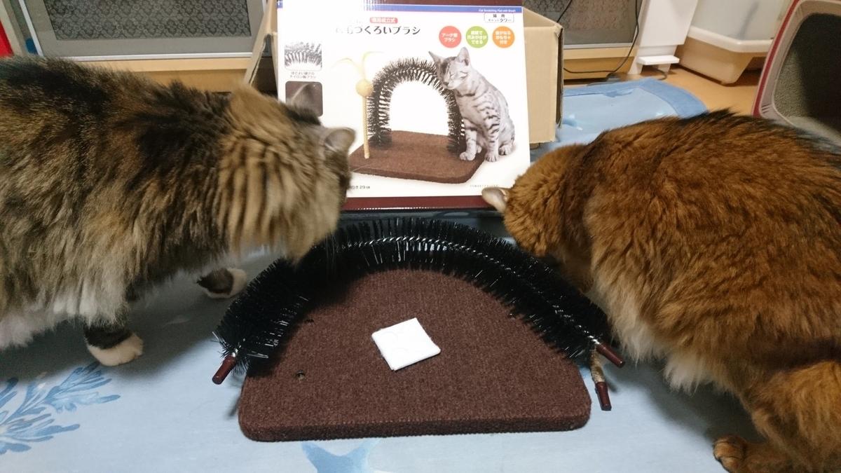 新しいおもちゃに興味深々の猫、トトとチー