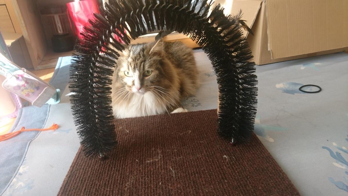モダンルーム毛づくろいブラシにすりすりする猫、トト