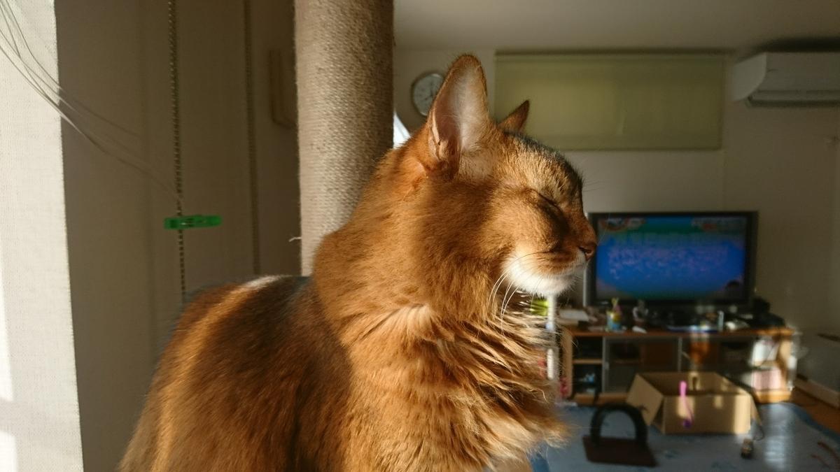 朝の猫の横顔、チー