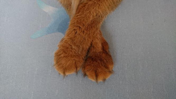 腕を組む猫、チー