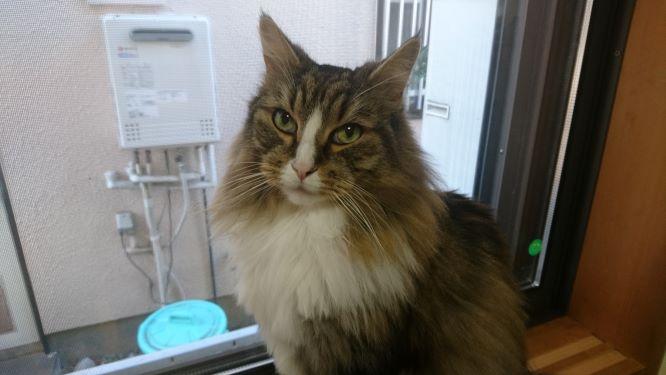 窓辺の猫、トト