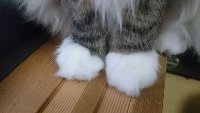 猫の足、トト