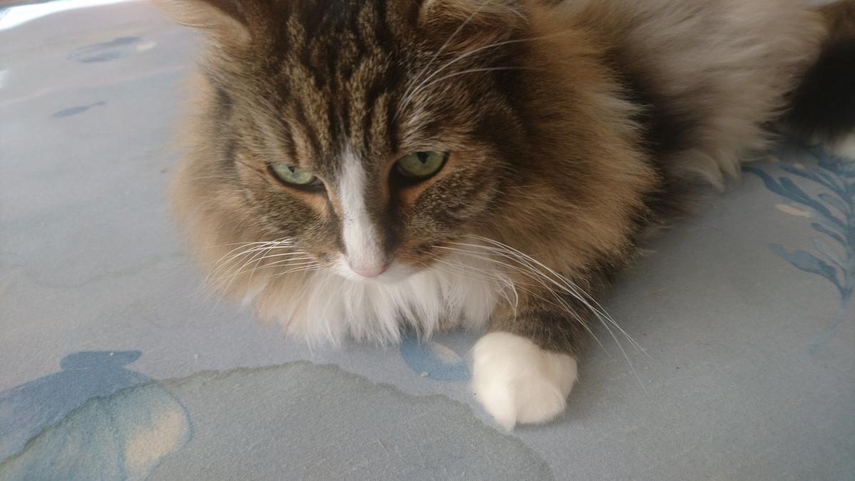 何を見つめる猫、トト