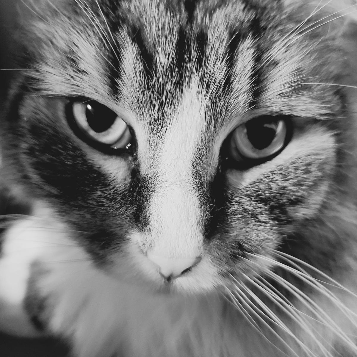 渋いトト、猫