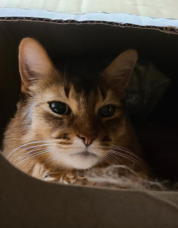 かくれんぼをしている猫、チー
