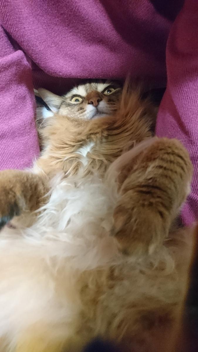 母さんに甘える猫、チー
