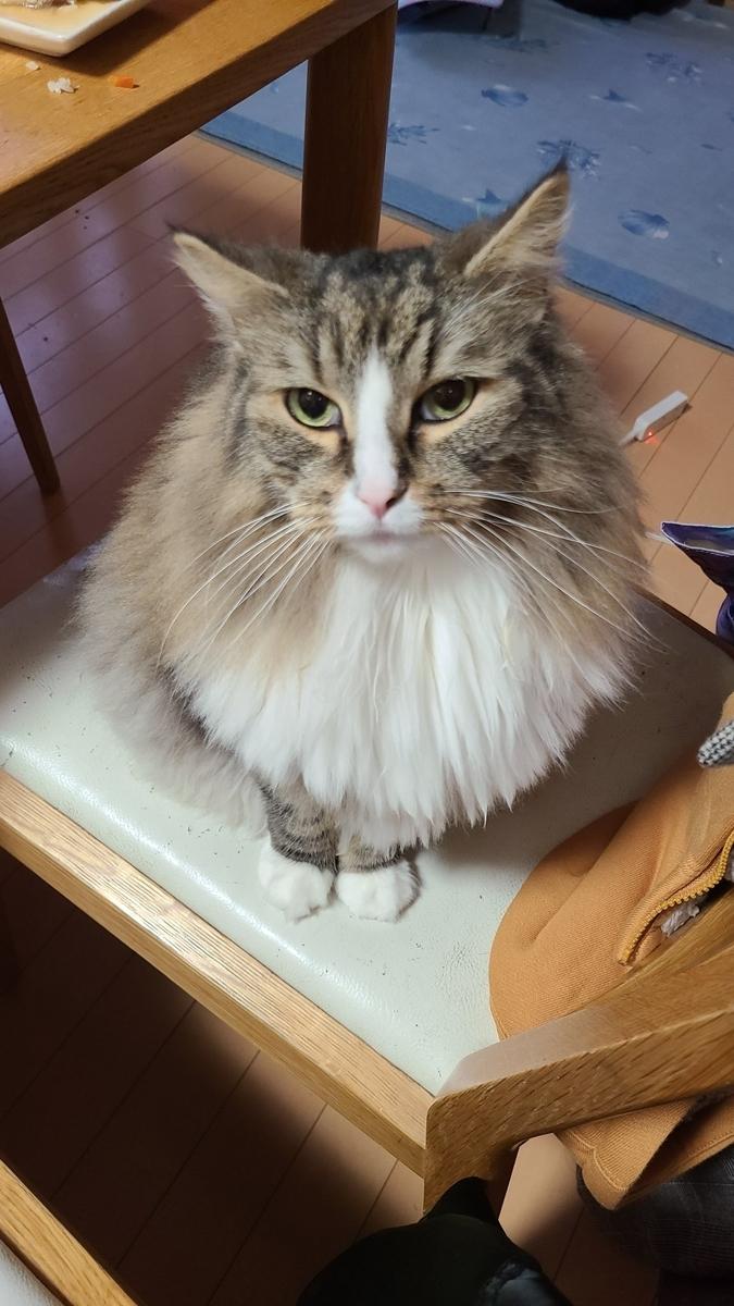 何かを待つ猫、トト