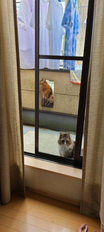 家出する猫、チーとトト