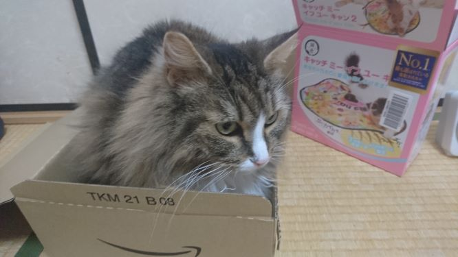 キャッチ・ミー・イフ・ユー・キャン2 の様子をうかがう猫、トト