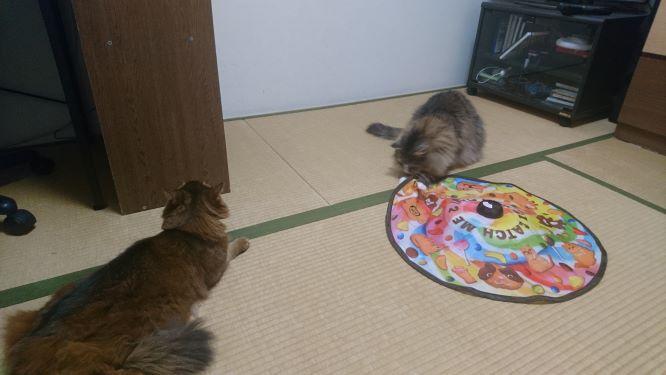 キャッチ・ミー・イフ・ユー・キャン2が気になる猫、チー