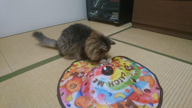 キャッチ・ミー・イフ・ユー・キャン2で遊ぶ猫、トト
