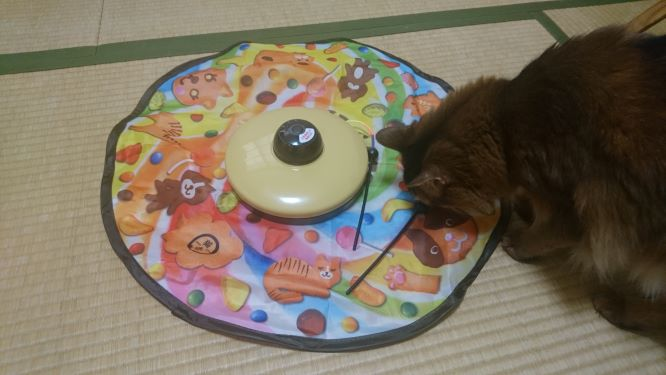 キャッチ・ミー・イフ・ユー・キャン2 の様子をうかがう猫、チー