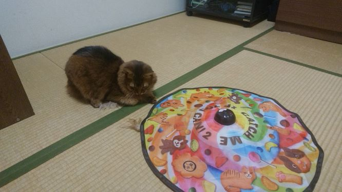 キャッチ・ミー・イフ・ユー・キャン2 で遊ぶ猫、チー