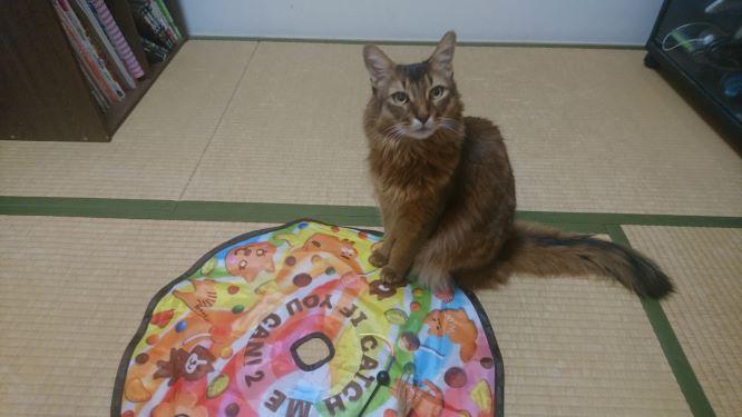 キャッチ・ミー・イフ・ユー・キャン2 が動くのを待つ猫、チー
