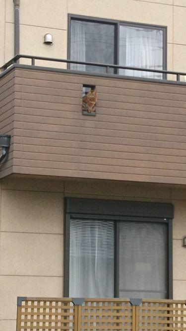 ベランダで遊ぶ猫、チー