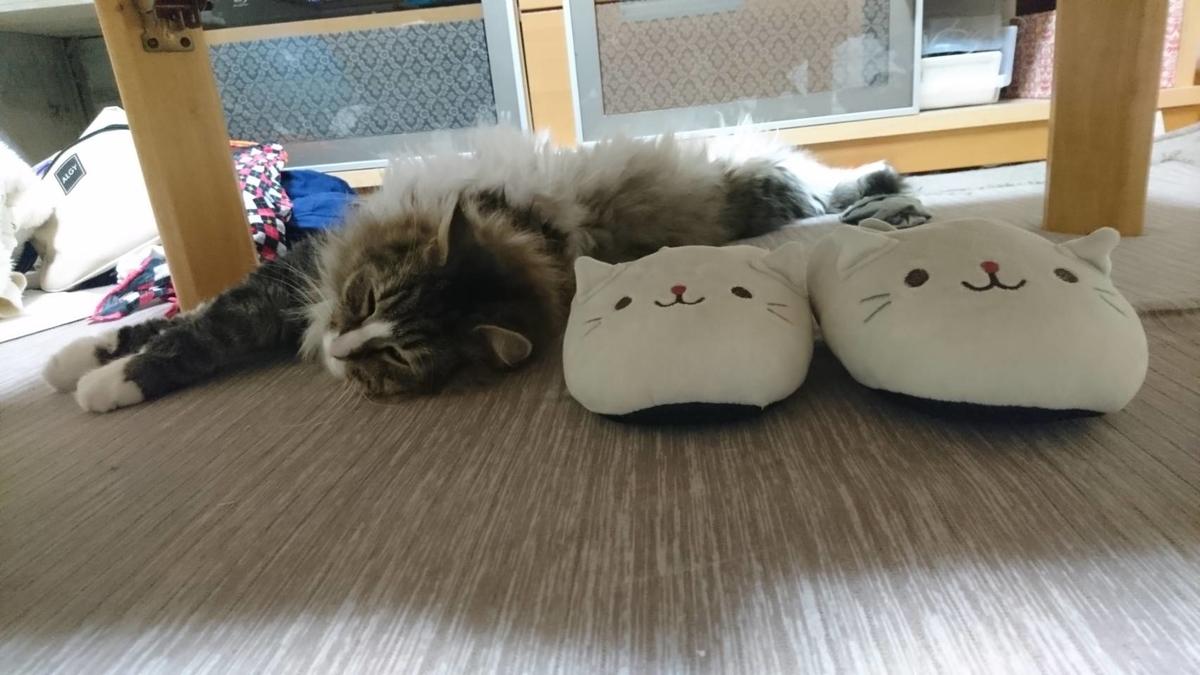 スリッパに擬態する猫、トト