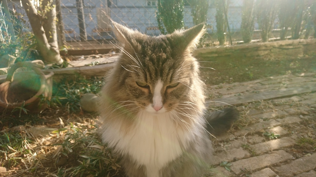 お散歩する猫、トト