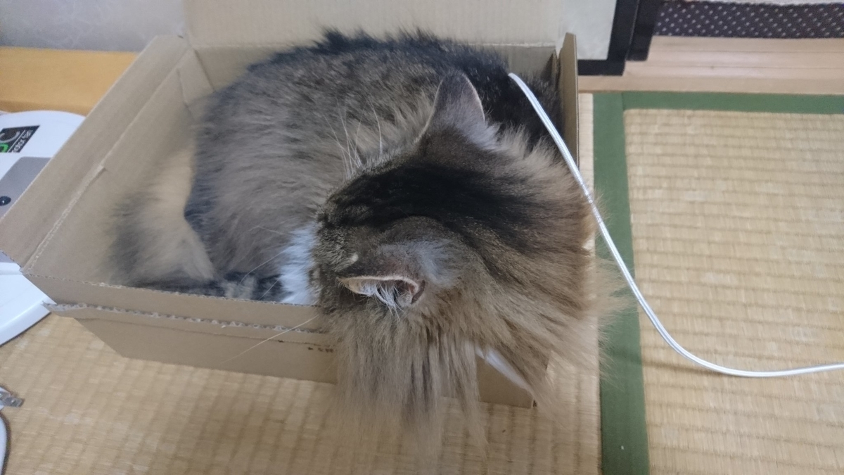 バッテリー切れの猫、トト