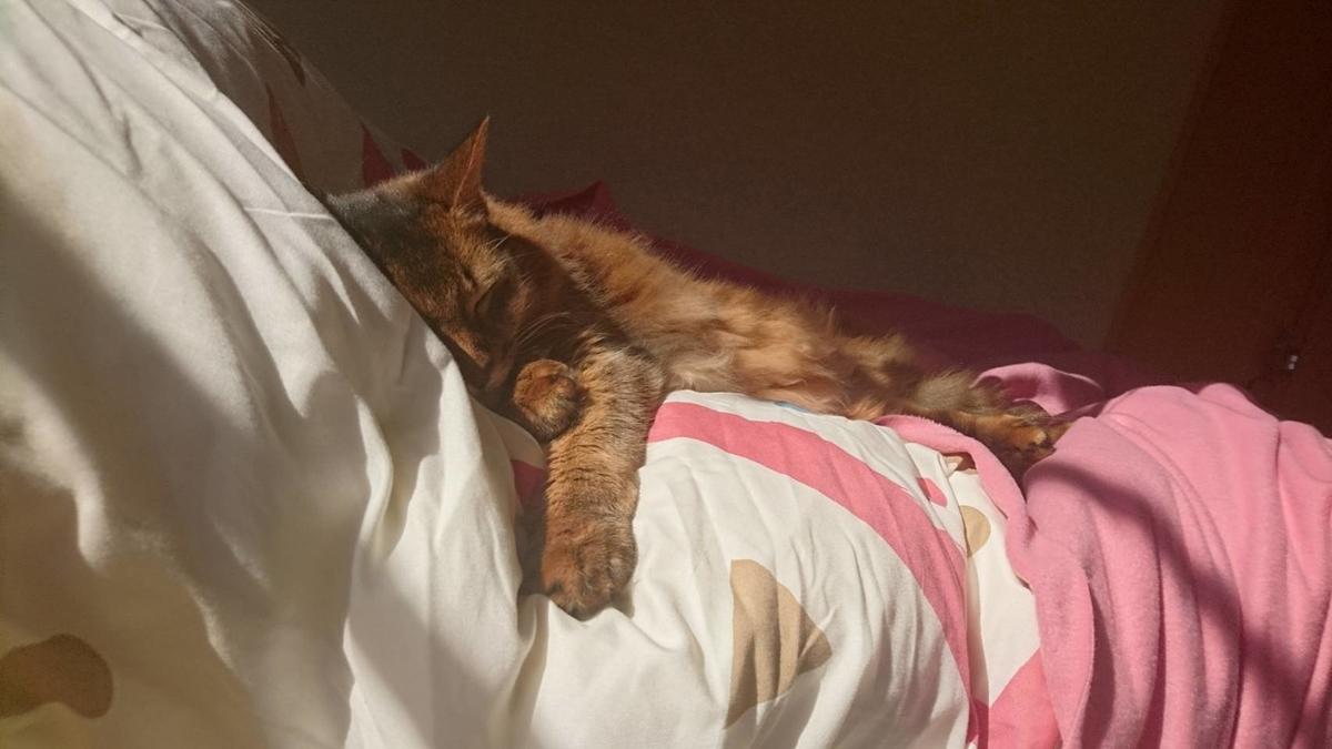 朝寝坊の猫、チー
