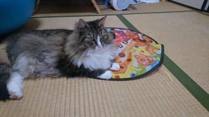 キャッチミーが大好きな猫、トト