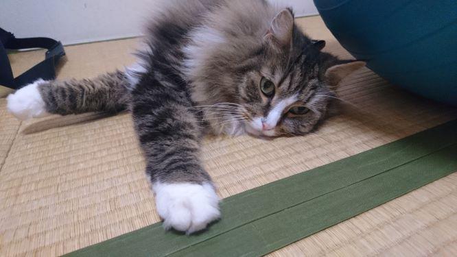 リラックスタイムの猫、トト