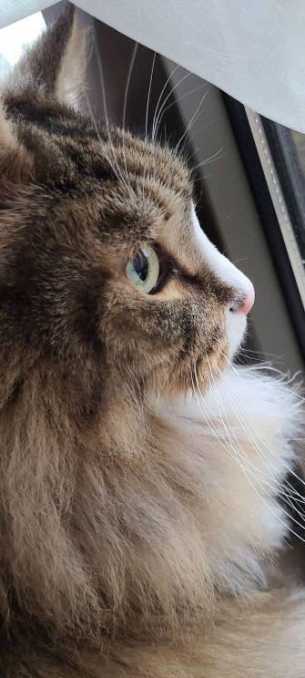 遠くを見つめる猫、トト