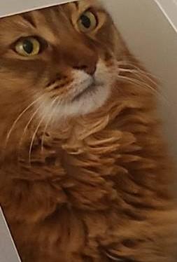 真剣な顔の猫、チー