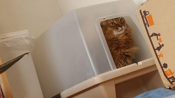 うんこをする猫、チー