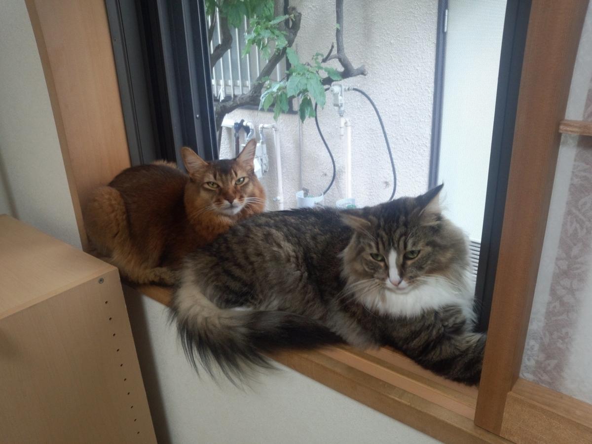 2両編成の猫、トトとチー