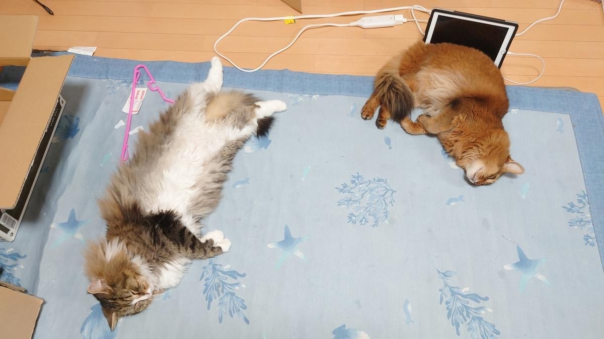 寝転ぶ猫、トトとチー