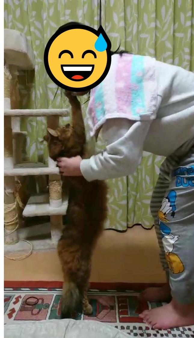 びよ~んと伸びる猫、チー